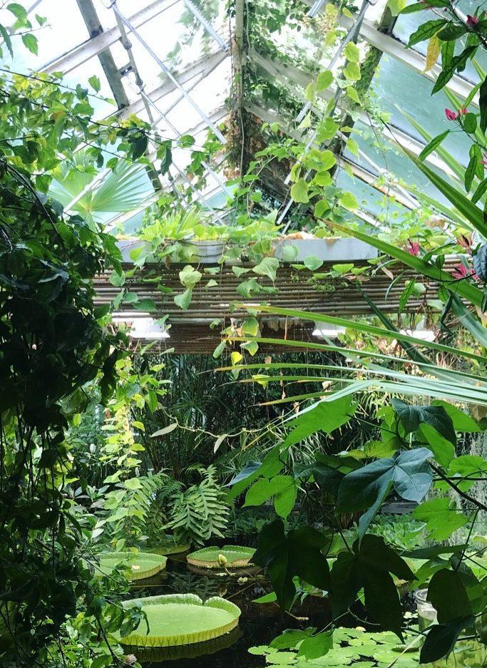 Botanisk hage Julie