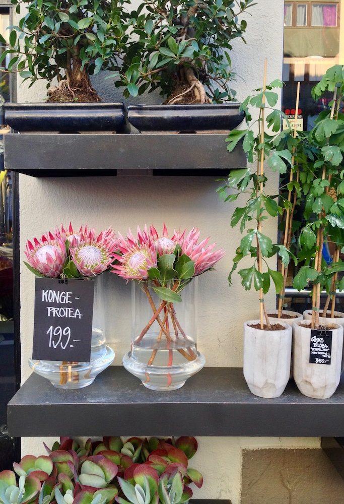 Blomster sthanshaugen