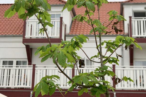 Blokhus Strandhotell