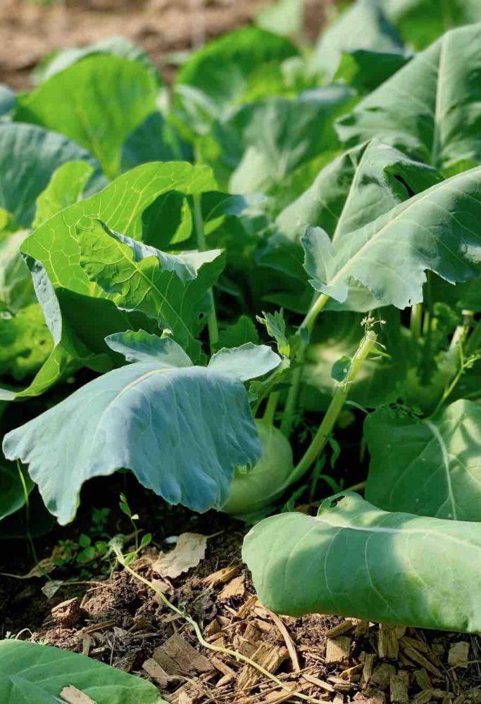 Mye av det man får servert på Stedsans, er enten dyrket på gården eller funnet i naturen rundt kjøkkenet.